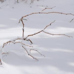 Winter Solitude by Mei-Ying Jue