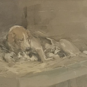 Hound with Litter