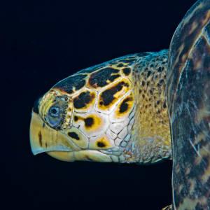 Turtle by Patrick Reardon, MD