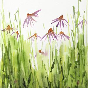 Edmundson echinacea small nov 2018 72 800 buoz2m