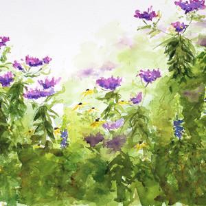 Edmundson ironweed aug wildflowers 72 800 itds5s