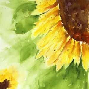Edmundson sunflowercorner 72 800 rt1ina