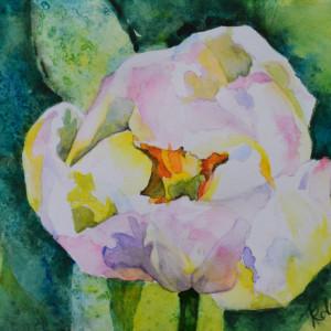 Peony Flowering Tulip
