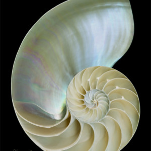 Nautilus Shell by Mary Ahern