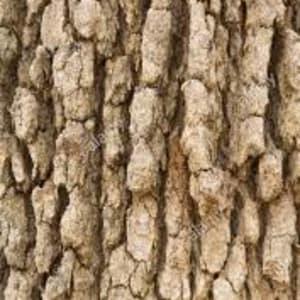 Bark: Marri