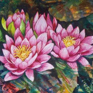 Water Lilies, 33 of 33 by Helen R Klebesadel