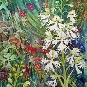 Fringed Prairie Orchid an original watercolor on canvas by Helen R Klebesadel