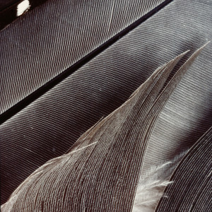 Feathers #25