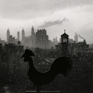 Rooster 1952