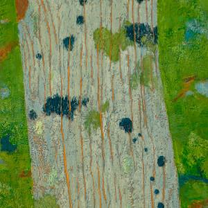 Blue Lichen, Nicolet National Forest Pine by Katherine Steichen Rosing