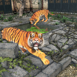 Tigers in the Courtyard