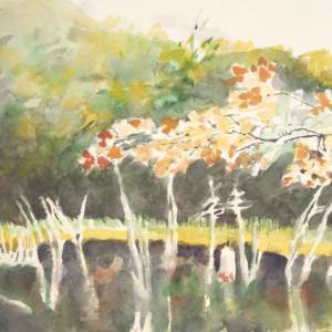 Maples at Beaver pond