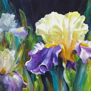 17 18 mixed iris in sun small it7we9