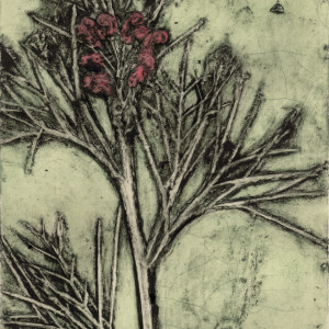 Albany Grevilea 2, EV 1/10 © Jacky Lowry 2017,  Collagraph Print on Paper
