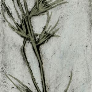 Kangaroo Grass 2 1/5