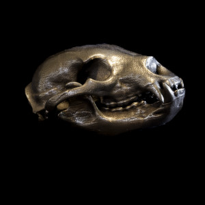 Bronze Bear Skull by Alan Powell