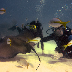 Petting a Sting Ray by Alan Powell