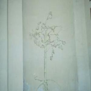 The tree by Gallina Todorova