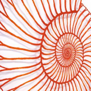Red Ammonite