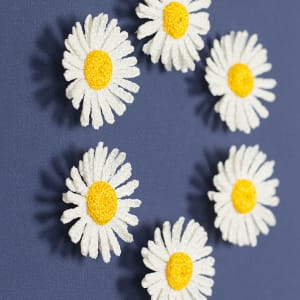 Daisies by Meredith Woolnough