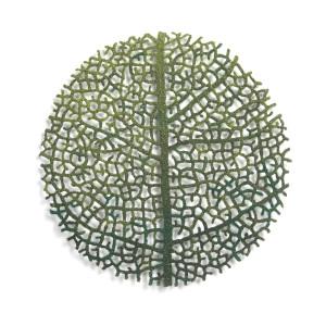 Nature Study #9 (Leaf Vein Study)