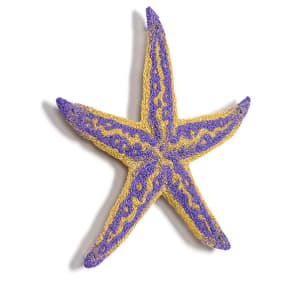 #91 Northern Pacific Sea Star by Meredith Woolnough