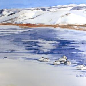 Swans on Ice