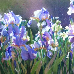Sunstruck Iris