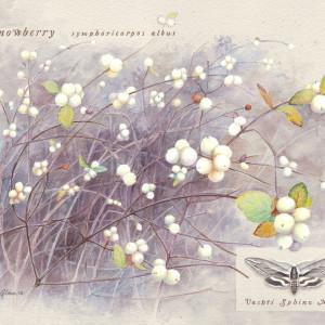 Snowberry by Jessica Glenn