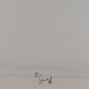 Wild Horse by F. Lipari