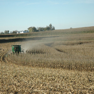 Corn Harvesting - Combine with Farm in Background