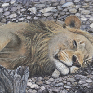 Resting Assured by Tammy Taylor