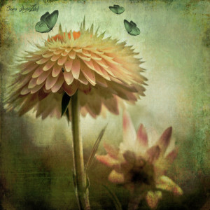 "7th Place - Ilona Abou-Zolof - ""Paper Daisy"""