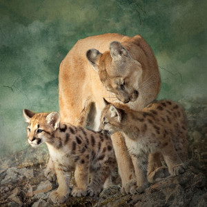 "7th Place – Overall - LouAnn Goodrich - ""Tender Moment"" – www.louanngoodrich-photoartist.com"