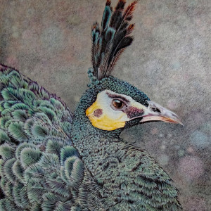 "10th Place - John Guiseppi - ""Green Peafowl"" - www.facebook.com/guiseppi.art.in.nature"