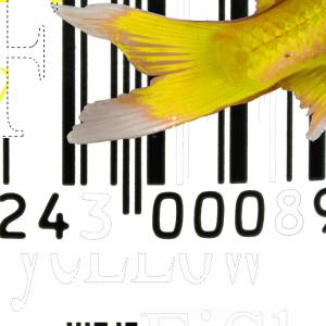 Brooklyn Yellow (Fish) 1/2