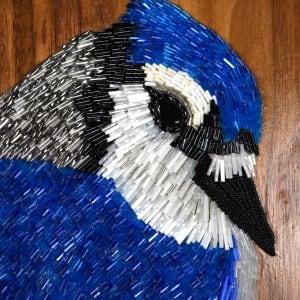John - Blue Jay by Sabrina Frey