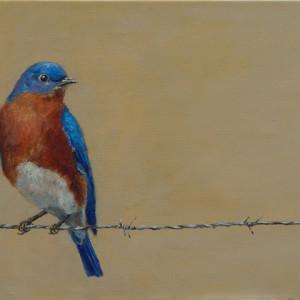 Ferrara bird on a wire 72 xaknku