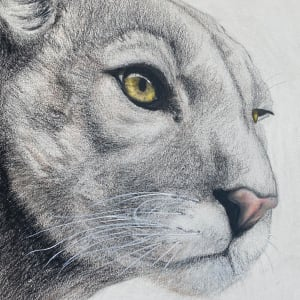 The Watcher II - Cougar by Wanda Fraser