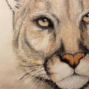 The Watcher - Cougar