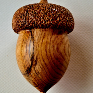 Large Acorn by Homer Daehn