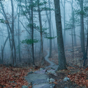 Foggy Path (Framed Photograph) by Mike Murray