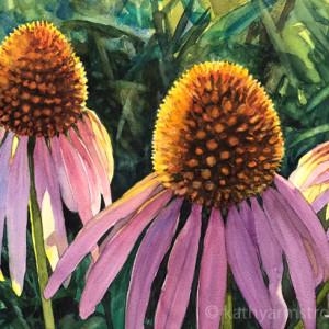 Purpleconeflowers 720 tgb64e