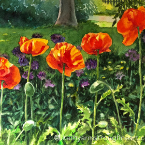 Showingoff poppies 720 caibwg