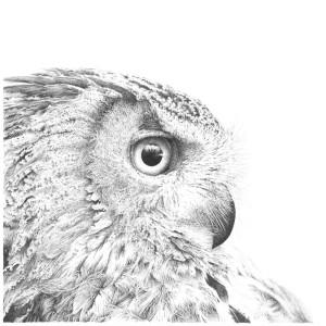 Long Eared Owl - Harold by Gary Wilcockson