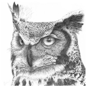 Long Eared Owl - Buster by Gary Wilcockson