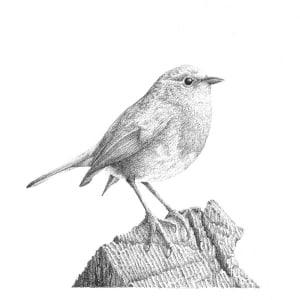 Garden Birds 2 Robin by Gary Wilcockson