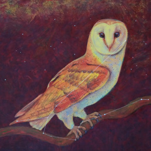 Astro owl constellation noctua yxeed5