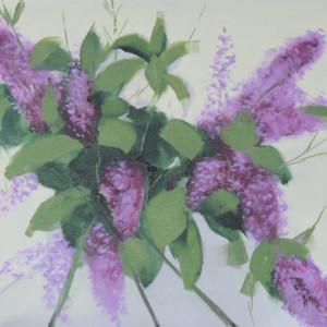 Lilacs crvg8q