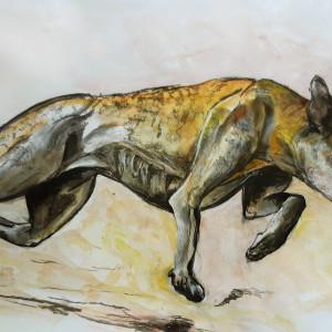 Greyhound turning d1pql8